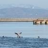 釧路の港で強風に負けた