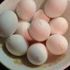 驚異のマッスル北村飯!卵10個プロテイン割りを作ってみた