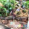 夢の島熱帯植物園に行ってきた