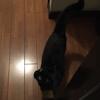 久しぶりに 黒猫りぃちゃん