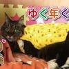88歳にゃんこの大晦日 88-year old cat: New Year's Eve in 2017