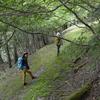 夏至に入るカヤハゲ遊山 森の道