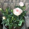花達の成長が励みです。母の骨折