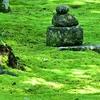 苔むした庭がきれいな秋篠寺