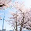 ちょっと怖い桜伝説 桜の歌にこめられた本当の意味
