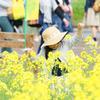 ■菜の花の国 奈義町@岡山;自衛隊車両で菜の花畑を周遊してきた