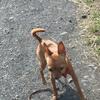 犬のお散歩で、基礎体力をつけてあげようね!