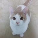 猫ヴィレッジ