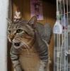 ちょっとブログのタイトルを変えてみた ~猫の名はプーチン~