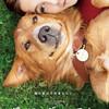 【ネタバレ感想】犬ちゃん映画『僕のワンダフルライフ』から学ぶ人生(レビュー)