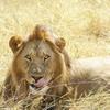 原色の国、ケニア。野生の動物たちの息遣いを感じられる場所。