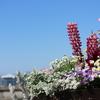 ミラーレスカメラで花をきれいに撮影するコツ
