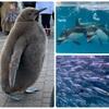 【登別マリンパークニクス】かわいいペンギンパレードにイルカと握手ができるイベントも✨イワシのパフォーマンスは必見です‼️