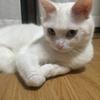 かわいい猫グッズは、すぐに買ってしまいますね。