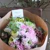 春の草花、弥生の桃色