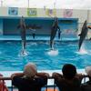動物と間近で触れ合える体験型水族館「南知多ビーチランド」に子供が夢中