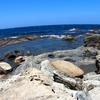 【山陰海岸ジオパーク】(その3)波食甌穴群終点まで岩場を歩く!