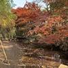 晩秋の奈良公園界隈を散策してきました