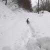 ルウさん、吹雪に困り顔