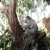 オーストラリア旅「シドニーと弾丸エアーズロックの旅!大都会シドニーのど真ん中でコアラ!ダーリングハーバーの休日とイタリアン」