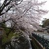 高崎街中の桜の開花状況 20160402
