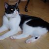 今日の黒猫モモ&白黒猫ナナの動画ー1015