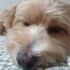 犬の疥癬の症状と原因治療法を勉強しよう