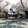 青山 桜祭り