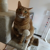 めずらしく、キャットタワーで遊ぶ猫さん