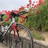 自転車(ロードバイク クロスバイク)のダイエット実力は!?