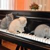 """おしえて!ピアノで弾けたらカッコイイ""""一撃必殺の曲""""を募集中です。"""