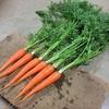 採れたて新鮮野菜!「野菜セット宅配」のメリット
