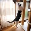 自分ルールにしばられる猫