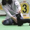 ジャパンインターナショナルドッグショー2017(長っ)行って来ました~♪(4/2)