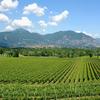 イタリア ワイン 7 フランチャコルタ Franciacorta