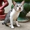 プノンペンは猫多し!(世界の猫探し11〜20匹目)