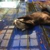 コツメカワウソと握手できる!超接近遭遇がウリの水族館
