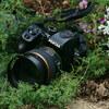 My best shot / PENTAX K-70