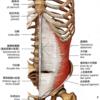 体幹筋機能とトレーニング①