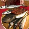 本日の漁港直送の魚たち!【メジナ】【サバ】【金時鯛】【飛魚】
