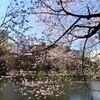 ちょっと歩けば桜にあたる?の季節到来
