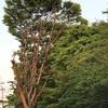 ダジャレでなく妙な存在感のすげえ木を見ると気にならないか