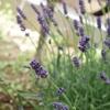 5月の小庭、みどり
