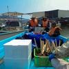 アサリ漁の復活はあるか