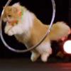 【速報】究極のネコ芸に全米衝撃 / Super Trained Cats Make AGT Debut!
