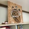 猫を室内で飼うための対策 ~キャットウォークをDIY 第一弾~