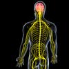 合気道の繊細な感覚を養う 身体意識とゆる体操
