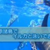 【小笠原諸島】ドルフィンスイム、シュノーケリング、南島上陸ツアーに参加しました!