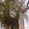 東根市 東根城の歴史と史跡をご紹介!(波乱の戦国時代編)🏯