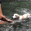【秋川渓谷①】日帰り家族旅行で初川泳ぎ。